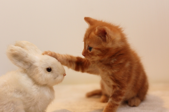 猫アレルギーでも猫を飼う方法を考えてみた
